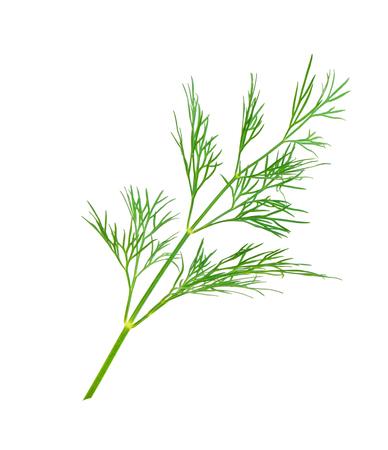 dill herb leaf close up macro isolated on white background Zdjęcie Seryjne