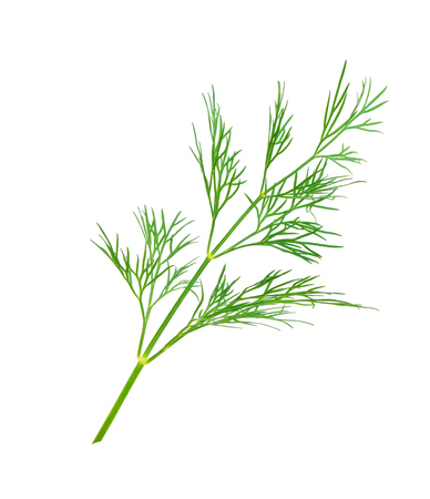 dill herb leaf close up macro isolated on white background Standard-Bild