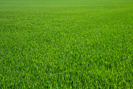 Background of a green grass Stock Photo