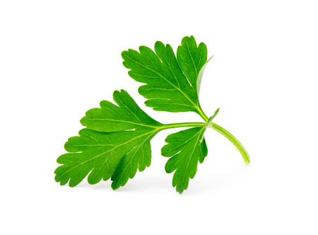 parsley isolated on white Foto de archivo