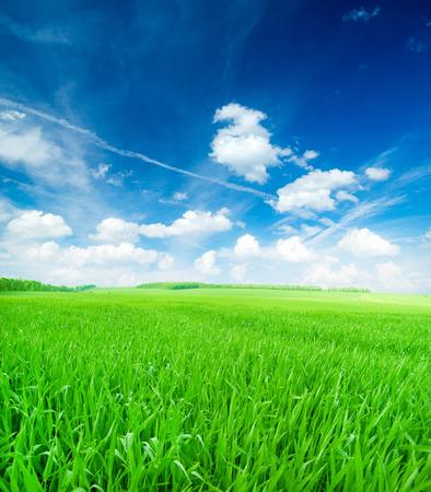 dia soleado: campo de hierba de la primavera Foto de archivo