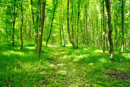 uplifting: beautiful green forest Stock Photo