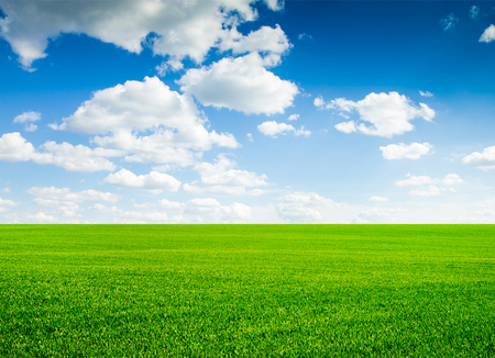 lawn grass: field of grass and perfect sky