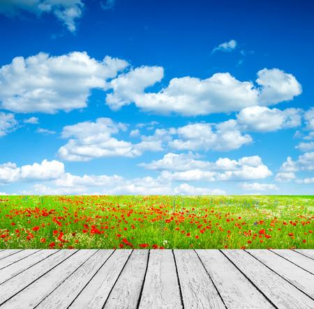 country landscape: Vivid poppy field Stock Photo