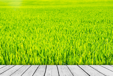 Green field under blue sky. Wood planks floor. Beauty nature background