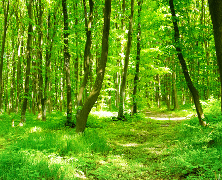 green forest Foto de archivo