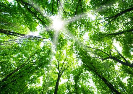 selva: Bosque verde de fondo Foto de archivo