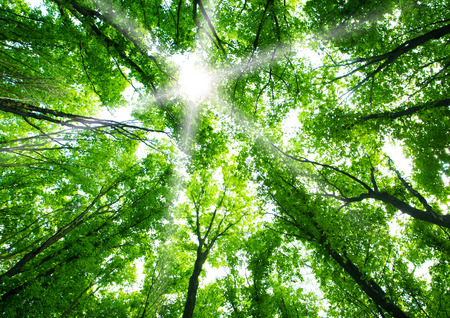 Green forest background Stock Photo - 46205735