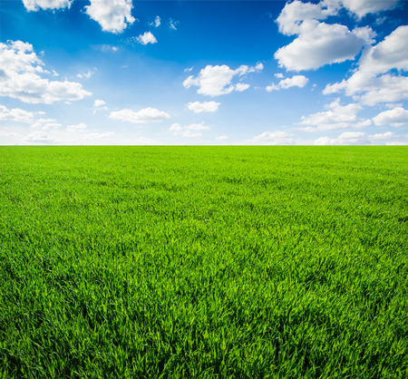 on the sky background: field of grass and perfect sky