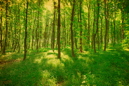 glades: green forest background in a sunny day Stock Photo