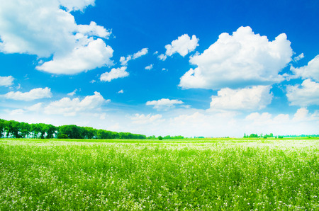 blue sky and fields: green field and blue sky