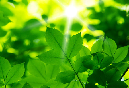 green life: fresh and green leaves