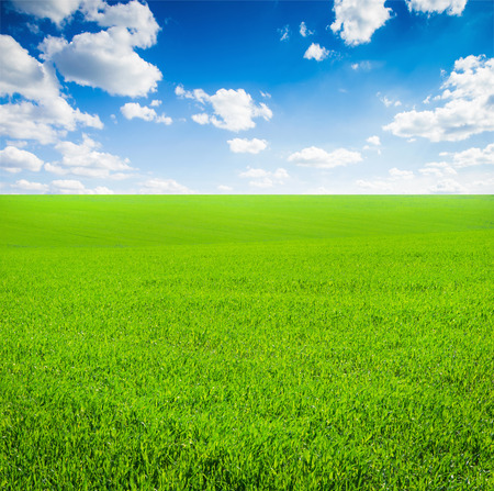grass country: field of grass and perfect sky