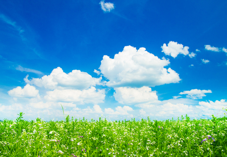 green meadow: green field and blue sky