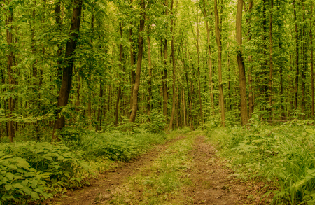 Aardachtergrond van groen bos