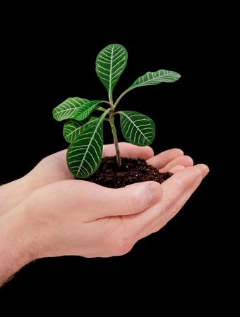 hands holding plant: hands holding plant on black