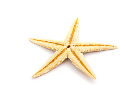 close up food: The caribbean starfish on a white background. Stock Photo