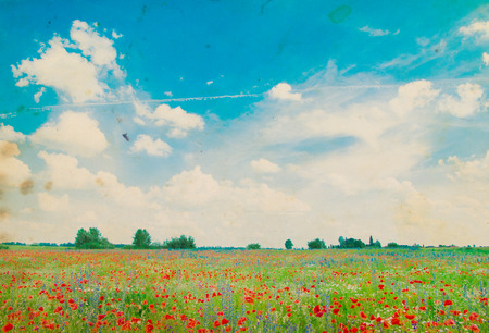 fields of flowers: Field of bright red corn poppy flowers in summer