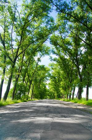 non urban: Asphalt road in the deciduous forest.