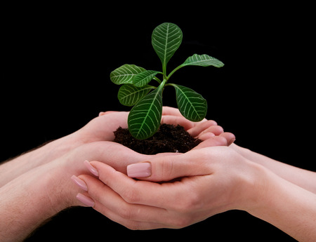 grower: hands holding plant on black