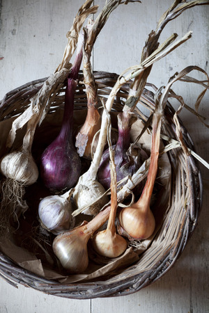 straw basket with freshly harvested garlic and onions with rustic backgroun photo