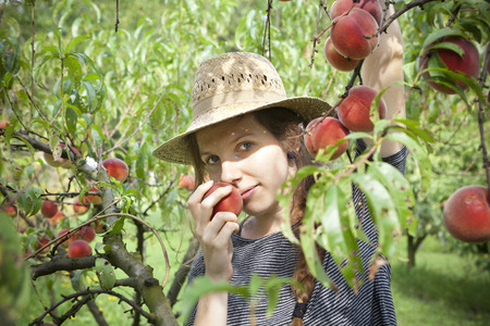 sniff: young pretty farmer woman with plait and straw hat who sniff a fresh peach from tree