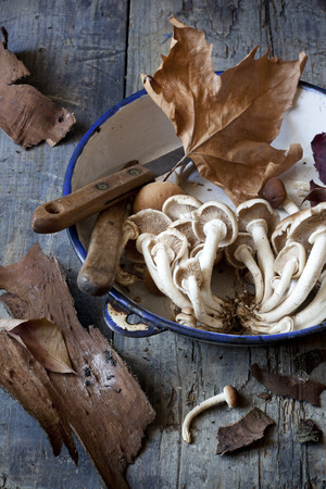 fresh picked mushrooms on vintage plate on rustic table with knives, leafs and tree bark photo