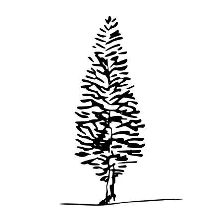 Hand drawn poplar juniper tree sketch style, black isolated hemlock aspen plant on white background. Vector illustration monochrome.