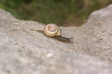 Snail on the go