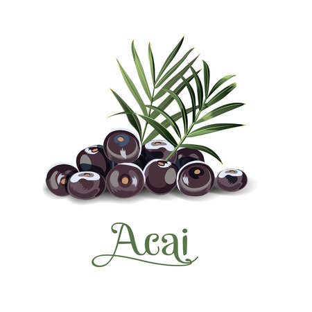 Acai berries for labels, posers, postcards and others.