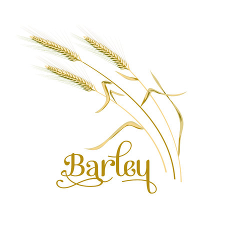 Barley, oat set. Plant, spikelet with ears, grains, seeds, sheaf. 3d icon vector. For design illustration decoration cooking bakery tags labels textile  イラスト・ベクター素材