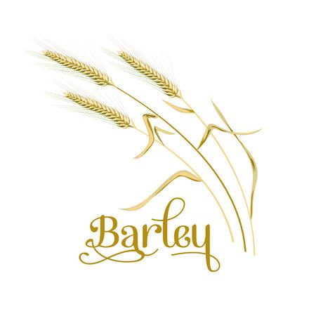 Cebada, avena. Planta, espiguilla con espigas, granos, semillas, gavilla. Vector icono 3d Para el diseño, ilustración, decoración, cocina, panadería, etiquetas, etiquetas, textil
