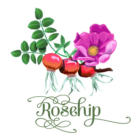 Red rosehip berry flat icon with inscription colorful vector illustration of eco food isolated on white.