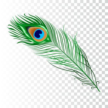 Piuma di pavone. Illustrazione vettoriale su sfondo bianco. Immagine isolata.