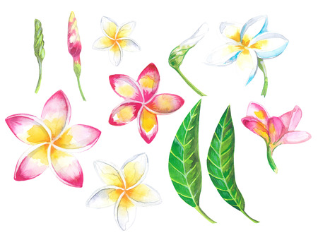 Watercolor summer tropical set for design banner or flyer with exotic palm leaves, Plumeria flowers Banco de Imagens