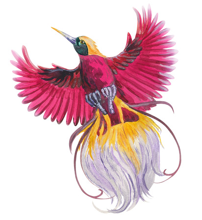 magic  tropical bird of paradise. watercolor  illustration blue, red, magenta colorful flying beautiful bird. single element for your floral design.