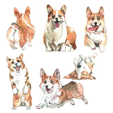 watercolor set with pretty corgi for logos, invitations and others