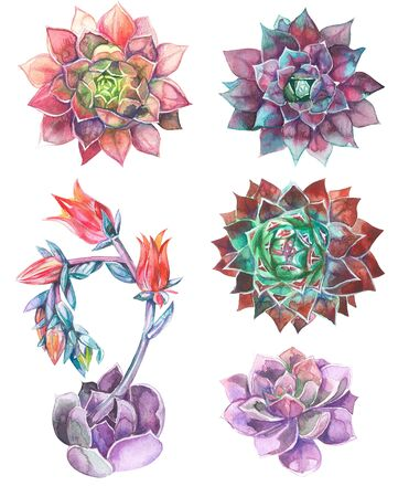 set of succulents, green bouquet, echeveria watercolor illustration, botanical painting 版權商用圖片