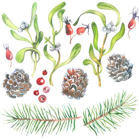 Christmas watercolor set with Mistletoe, Spruce branches, cone, and Fir Sprigs with berries isolated on white background. Xmas Decoration Watercolor illustration set.