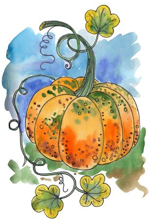 Pumpkin watercolor drawing 版權商用圖片