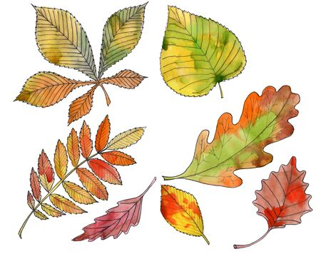 Hand drawn watercolor set of colorful autumn leaves isolated on white.