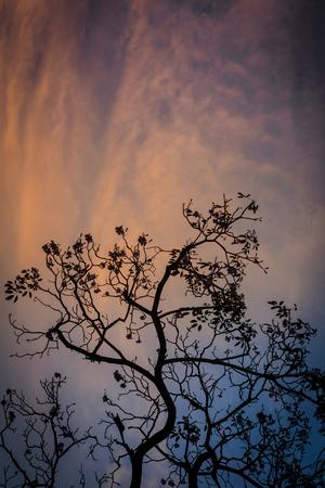 dramatic clouds: Dark tree in evening. Stock Photo