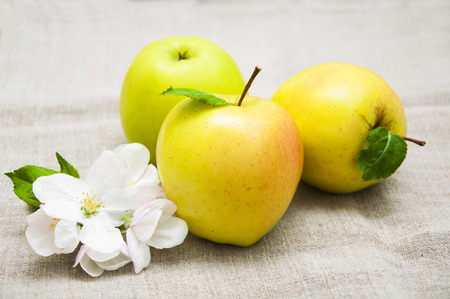 apple sack: Juicy yellow apple with blossom on sack background Stock Photo