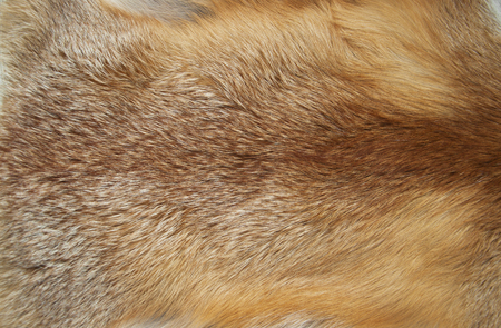 peltry: Background from fur of a red fox
