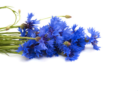 cornflowers: Bouquet cornflowers with isolated on white background