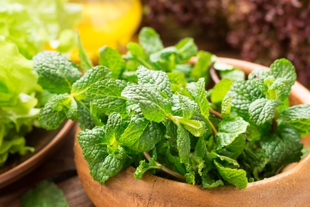 Greens from the garden for fresh healthy salad