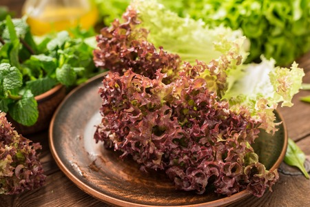 Fresh colorful lollo rossa and other greens for salad
