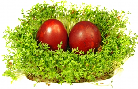 Easter eggs and cress      photo