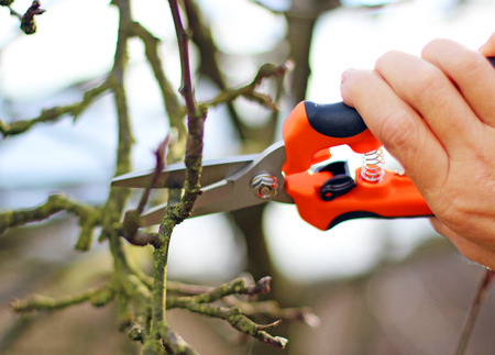 bole: tree pruning
