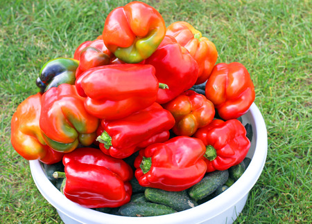pimiento: red pepper
